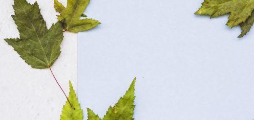Bitkilerde Molibden Kullanımı