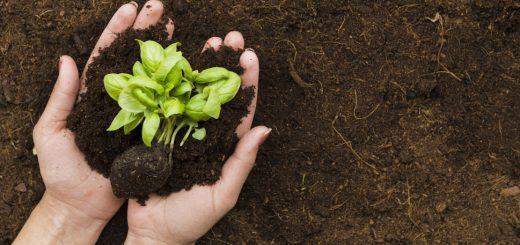 Molibden'in Bitkilerdeki Fonksiyonu Nasıldır