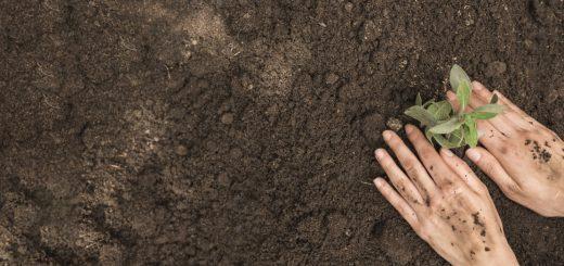 Tarımda Fosforun Önemi Nedir