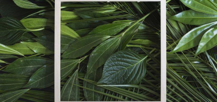 Bitki Büyüme Düzenleyici Hormonların Etkisi